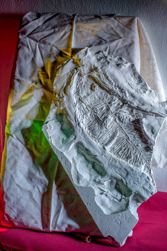 fishart fossil made out of plaster leaning against a textile by artist Stefano Conti